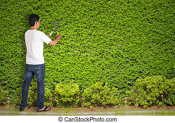 Man gardener cut with clippers