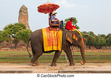 AYUTTHAYA - DECEMBER 14, 2014:Elephant is walking at a...