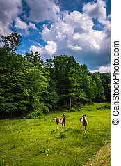 Horses in a farm field in the rural Potomac Highlands of West Vi