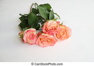 Long stem roses - Coral long stem roses on white