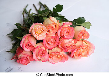 Long stem roses - Pink long stem roses on white