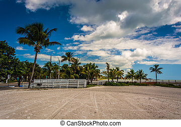 Palm trees at Higgs Beach, Key West, Florida