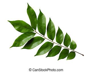 Starfruit Leaf - Starfruit Averrhoa carambola leaf isolated...