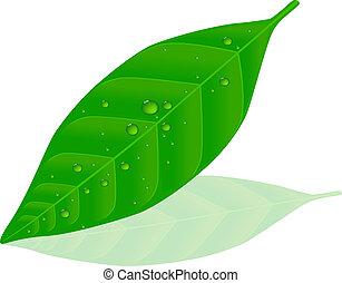 Green leaf - Dew on green leaf