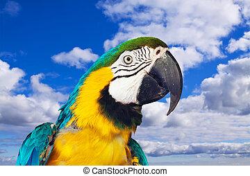 Head of Macaw papagay Ara chloropterus at nature