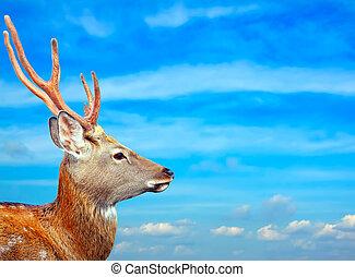 Sika deer against sky - Head of Sika deer against sky