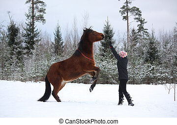 Teenager girl commanding bay horse to rear in winter forest
