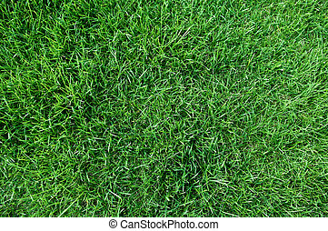 top view of fresh lawn grass