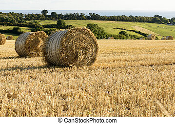 corn sheaves and sea, Cornwall