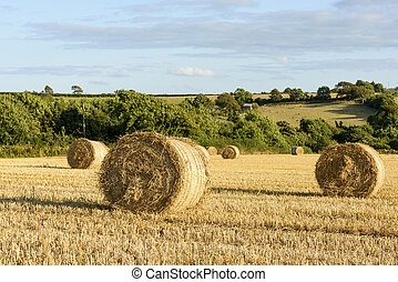 corn sheaves and hilly countryside, Cornwall
