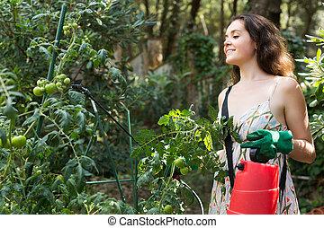 Female gardener spraying tomato plant