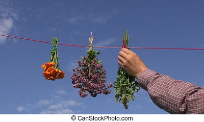 hanging fresh medical herbs flowers bunch on red string