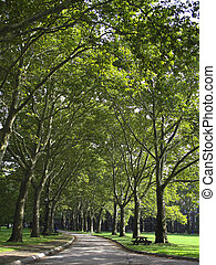 Tree-lined walkway in a park