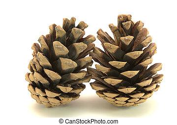 dos, conos, pine-tree, aislado