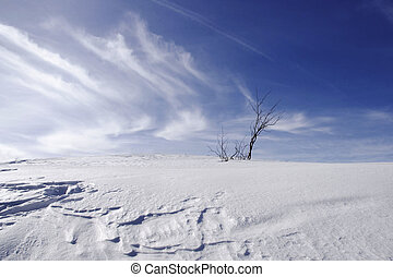 saplings isolated on a snowy hill in a windy day