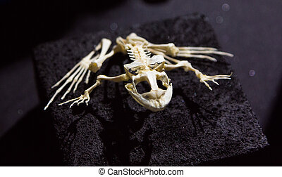 complete skeleton of a frog