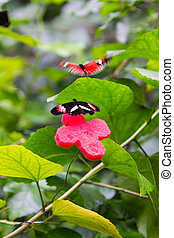 two butterflies flit and play each