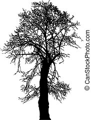 Linden Tree - Silhouette old linden tree winter, vector...