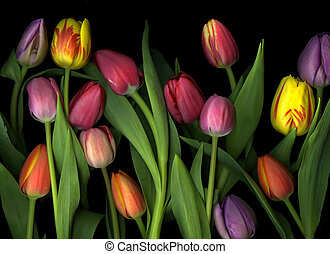 Colorful Tulips - Colorful tulip arrangement isolated on...
