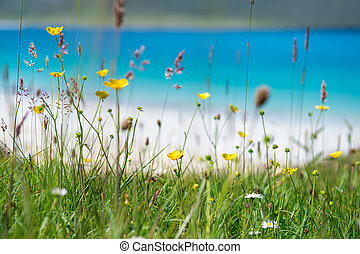 Close up of spring flowers with white sandy beach, turquoise...