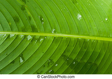 Banana leaves Thailand