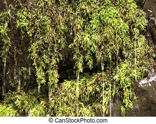 Water dripping through moss beside a waterfall