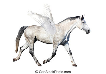 Gray horse pegasus trotting isolated on white background