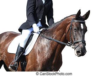馬, 被隔离, 黑色, 肖像, 在期間, 白色