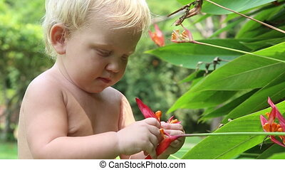 small blonde baby girl play with flower - child pulls the...