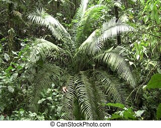Interior of Amazon rainforest