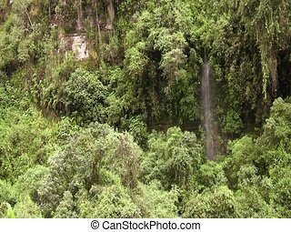 cloudforest waterfall - in the Ecuadorian Andes