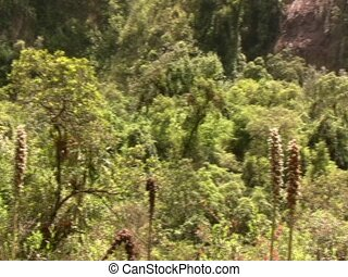 Cloudforest pan, ends at big waterfall - In the Ecuadorian...
