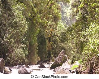 Cloudforest stream - on the rio Pita, Ecuador