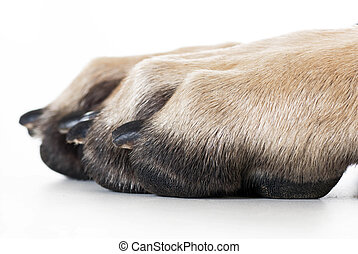 dog paw isolated on white background