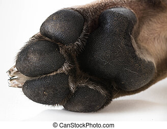 dog feet or paw isolated on white background