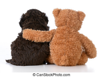 puppy and teddy bear - security - teddy bear with arm around...