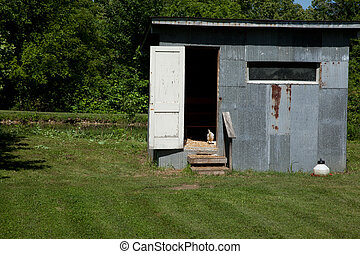 Chicken Coop - A chicken in the doorway of a chicken coop