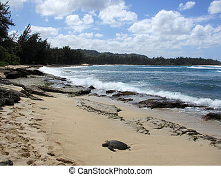 Turtle rest on beach as waves crash at Turtle Bay with trees...