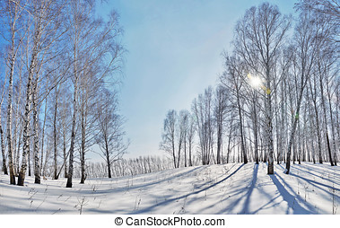 Beautiful winter landscape with bright sun and shadows from...
