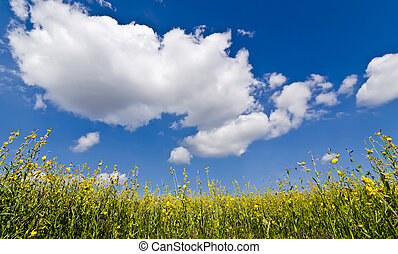blue sky and flower - Yellow flowers under big blue sky and...