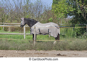 horse wearing fly mask and body blanket - Horse on farm...