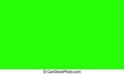 Grass growing in a pot green screen Full HD, Triticum L...