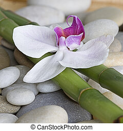 Orchid and bamboo - orchid and green bamboo sticks on pebble