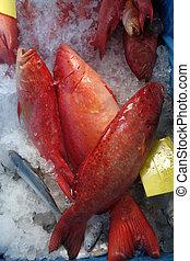 peixe, estrela, garoupa
