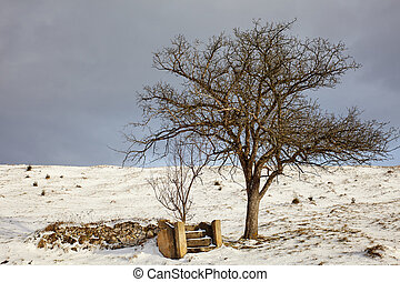 Old tree and ruin - Old tree near the remains of a...