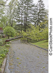 Spring Storm Downs Power Lines and Tree - A neighborhood...
