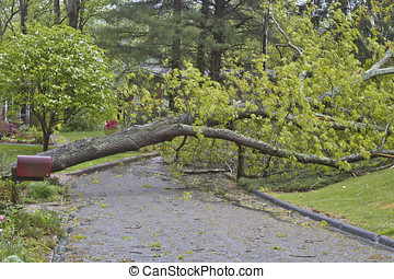 Tree and Power Lines Down On a Road - A neighborhood road is...