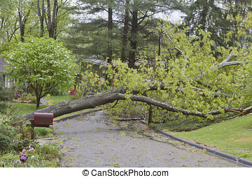 Storm Topples Oak Tree Across a Neighborhood Street - A...