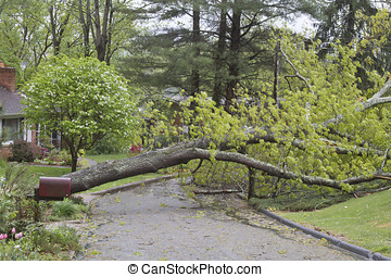 Storm Knocks Down Tree - A neighborhood road is blocked by a...