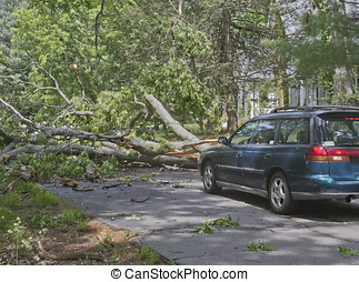 Tree Dead End - Car driving along a road is blocked by a...